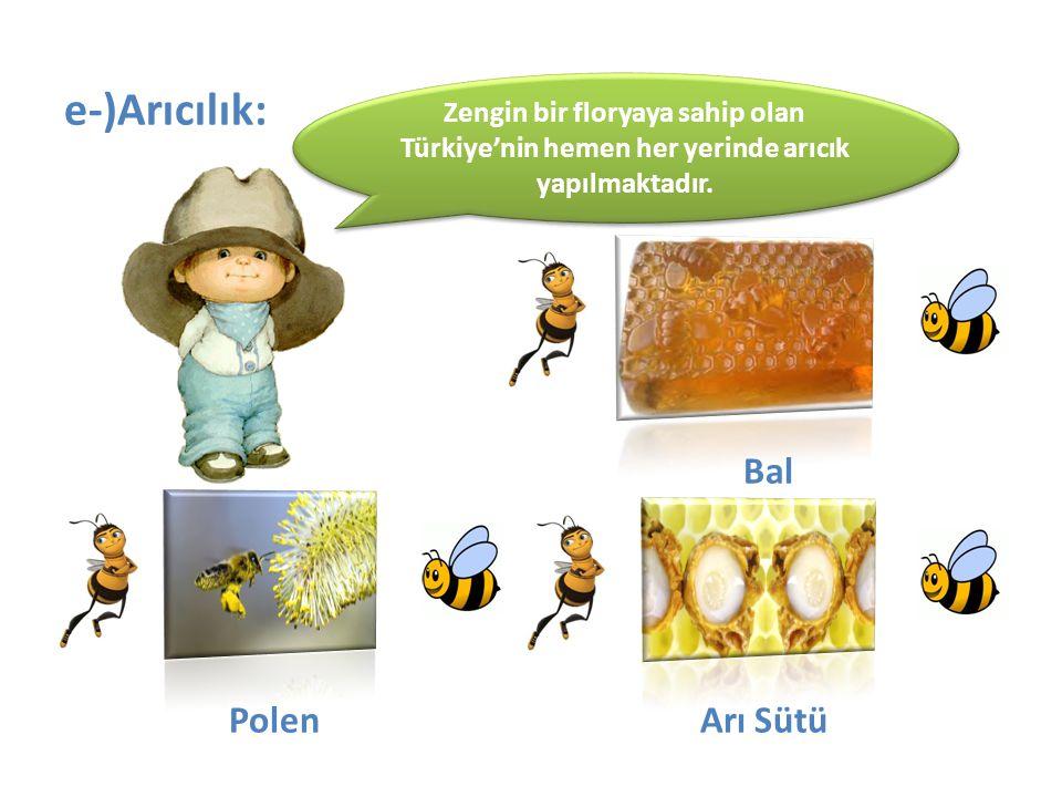 e-)Arıcılık: Bal Polen Arı Sütü Zengin bir floryaya sahip olan Türkiye'nin hemen her yerinde arıcık yapılmaktadır.