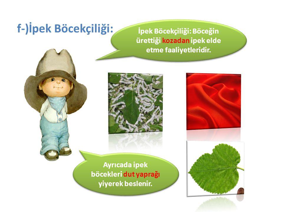 f-)İpek Böcekçiliği: İpek Böcekçiliği: Böceğin ürettiği kozadan ipek elde etme faaliyetleridir. Ayrıcada ipek böcekleri dut yaprağı yiyerek beslenir.