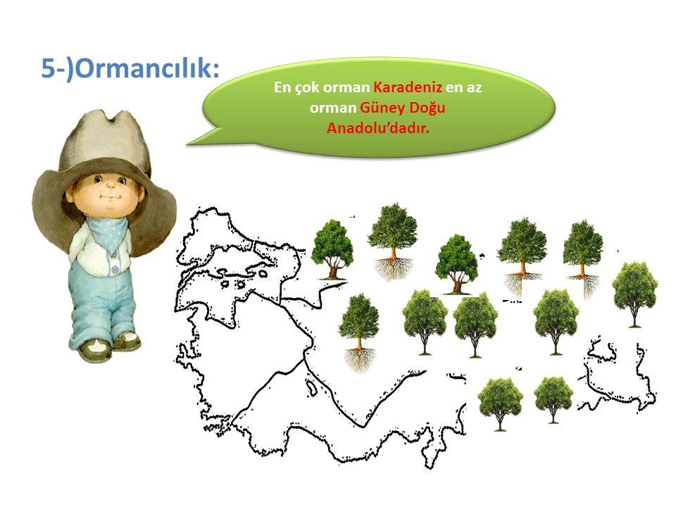 5-)Ormancılık: En çok orman Karadeniz en az orman Güney Doğu Anadolu'dadır.