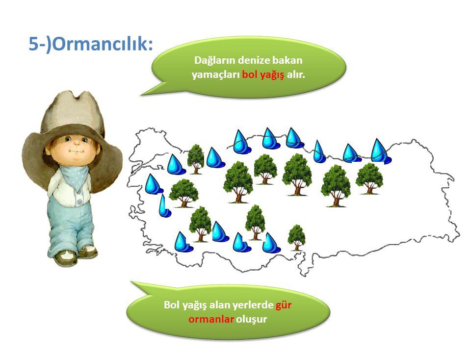 5-)Ormancılık: Dağların denize bakan yamaçları bol yağış alır. Bol yağış alan yerlerde gür ormanlar oluşur