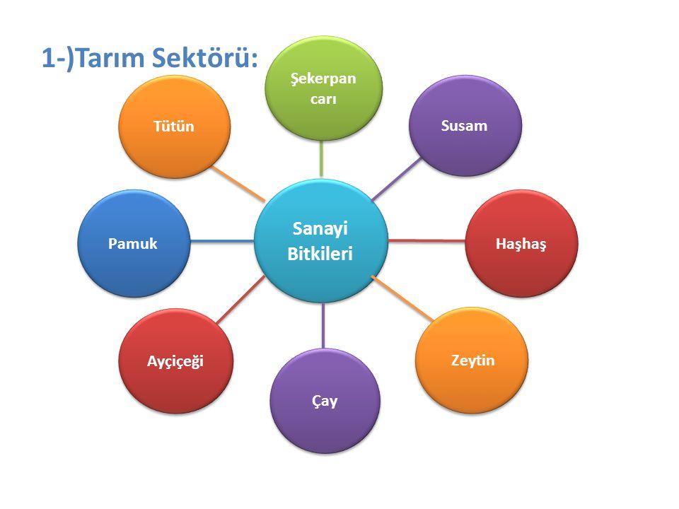 1-)Tarım Sektörü: Sanayi Bitkileri Susam Haşhaş Şekerpan carı Tütün Pamuk Ayçiçeği Çay Zeytin