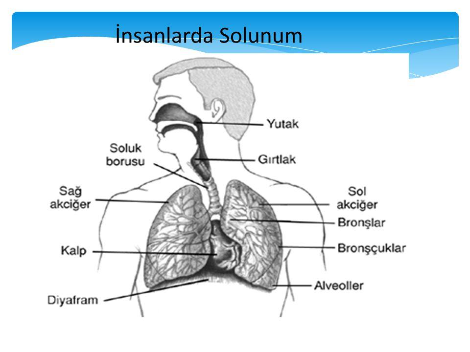 Vücudun enerji elde etmek için havadan oksijeni alıp karbondioksiti havaya vermesi olayına solunum denir.