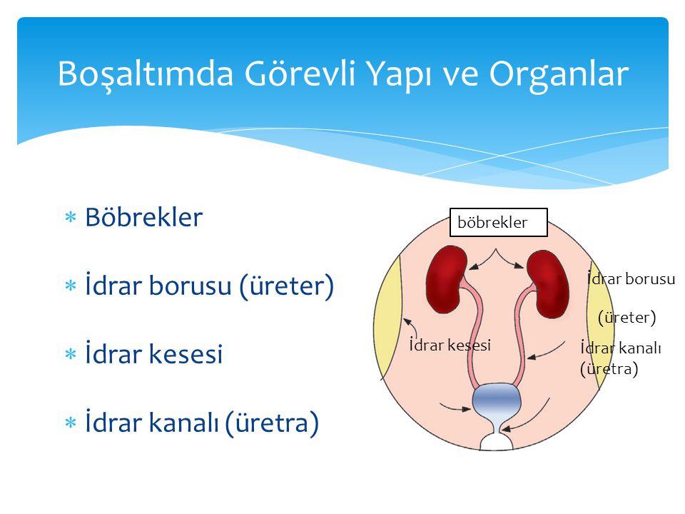 Boşaltımda Görevli Yapı ve Organlar  Böbrekler  İdrar borusu (üreter)  İdrar kesesi  İdrar kanalı (üretra) böbrekler İdrar borusu (üreter) İdrar kesesi İdrar kanalı (üretra)