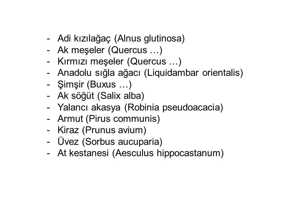 -Adi kızılağaç (Alnus glutinosa) -Ak meşeler (Quercus …) -Kırmızı meşeler (Quercus …) -Anadolu sığla ağacı (Liquidambar orientalis) -Şimşir (Buxus …)