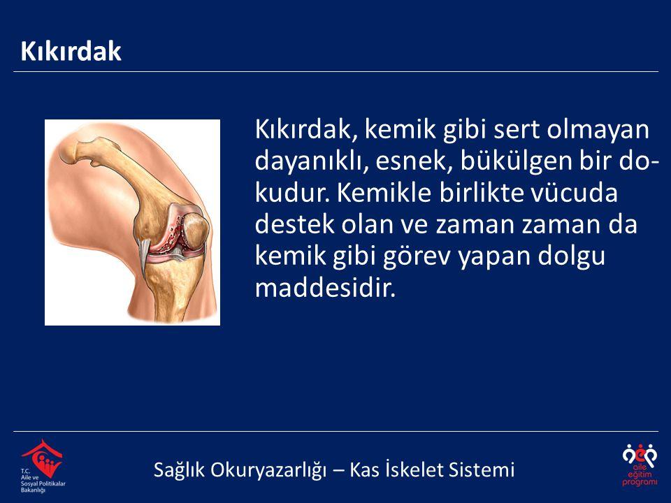 Kıkırdak Sağlık Okuryazarlığı – Kas İskelet Sistemi Kıkırdak, kemik gibi sert olmayan dayanıklı, esnek, bükülgen bir do- kudur. Kemikle birlikte vücud