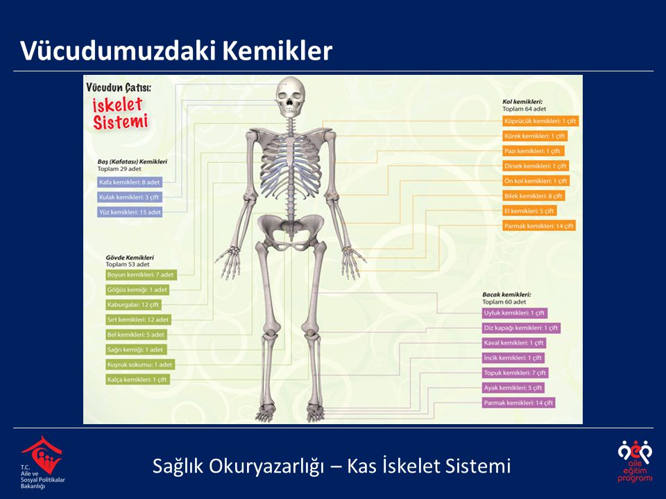 Vücudumuzdaki Kemikler Sağlık Okuryazarlığı – Kas İskelet Sistemi
