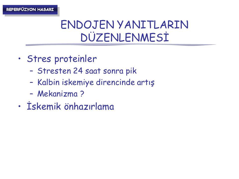 ENDOJEN YANITLARIN DÜZENLENMESİ Stres proteinler –Stresten 24 saat sonra pik –Kalbin iskemiye direncinde artış –Mekanizma .