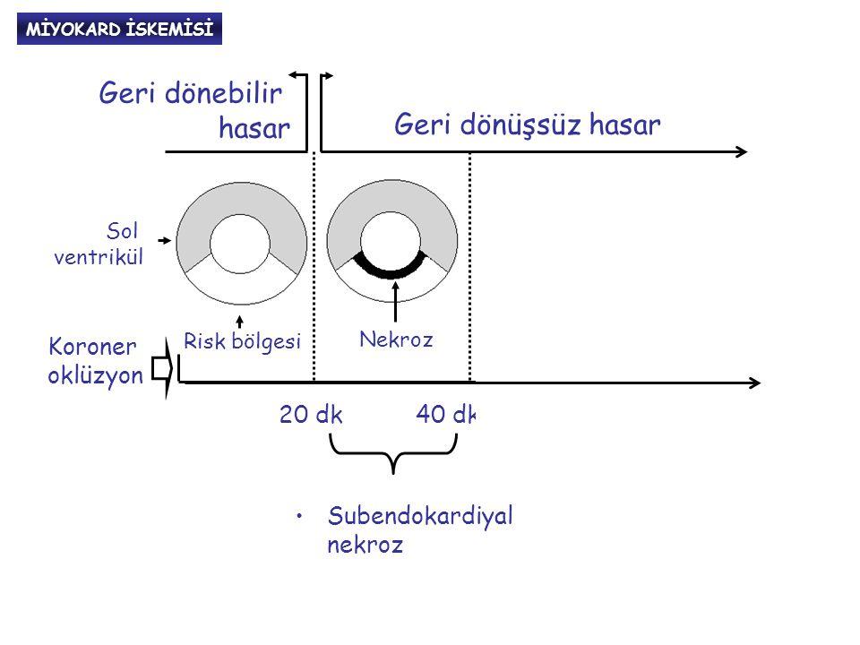 MİTOKONDRİLERİN ROLÜ BakBak BaxBax BidBid Bcl-X L BakBak BaxBax Bcl- 2 Mitokondri Bcl-w Proapopitotik faktörler Antiapopitotik faktörler APOPİTOZİS AIF * *Apopitoz indükleyen faktör Sitokrom-C Prokas-paz9