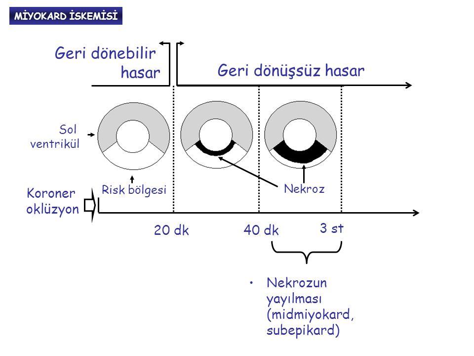 MİTOKONDRİLERİN ROLÜ BakBak BaxBax BidBid Bcl-X L BakBak BaxBax Bcl- 2 Mitokondri Sitokrom-C AIF* Proapopitotik faktörler Antiapopitotik faktörler APOPİTOZİS Prokas-paz9 Bcl-w *Apopitoz indükleyen faktör