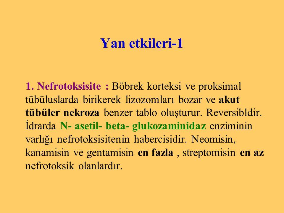 Yan etkileri-1 1. Nefrotoksisite : Böbrek korteksi ve proksimal tübüluslarda birikerek lizozomları bozar ve akut tübüler nekroza benzer tablo oluşturu