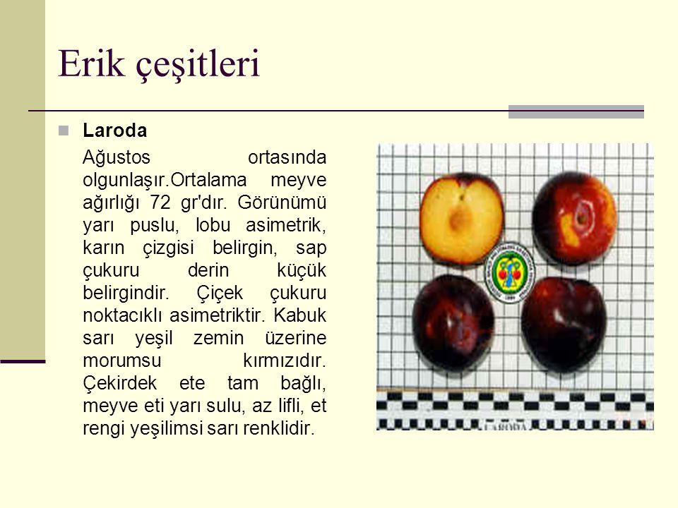 Erik çeşitleri Laroda Ağustos ortasında olgunlaşır.Ortalama meyve ağırlığı 72 gr dır.