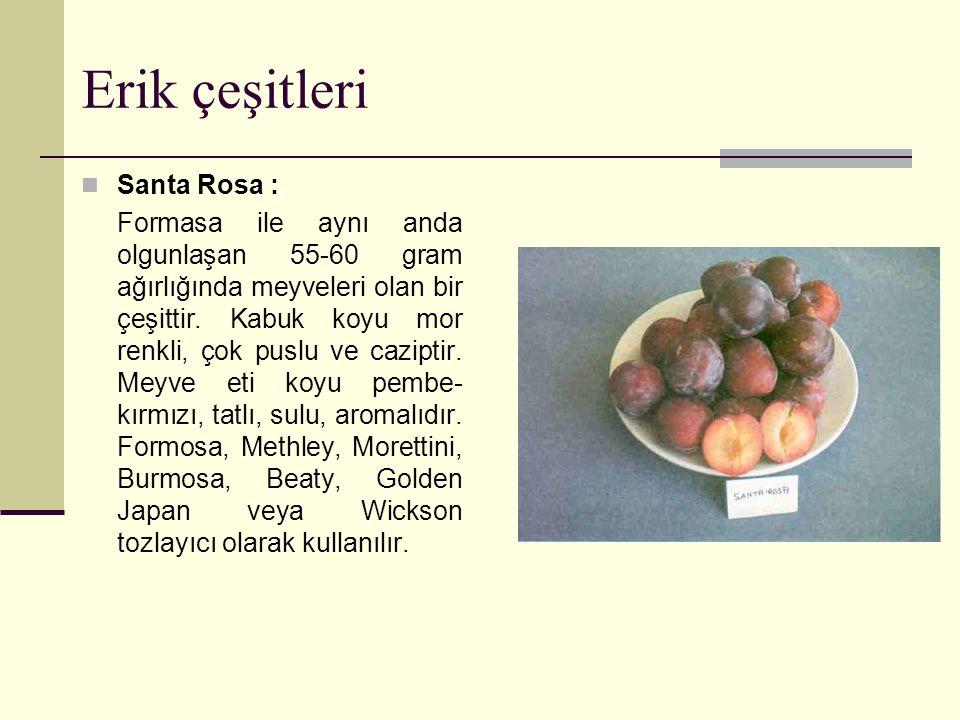 Erik çeşitleri Santa Rosa : Formasa ile aynı anda olgunlaşan 55-60 gram ağırlığında meyveleri olan bir çeşittir.