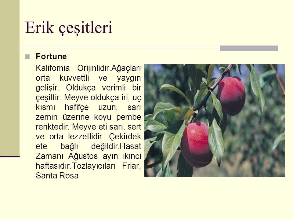 Erik çeşitleri Fortune : Kalifornia Orijinlidir.Ağaçları orta kuvvettli ve yaygın gelişir.