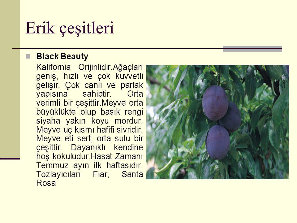 Erik çeşitleri Black Beauty Kalifornia Orijinlidir.Ağaçları geniş, hızlı ve çok kuvvetli gelişir.