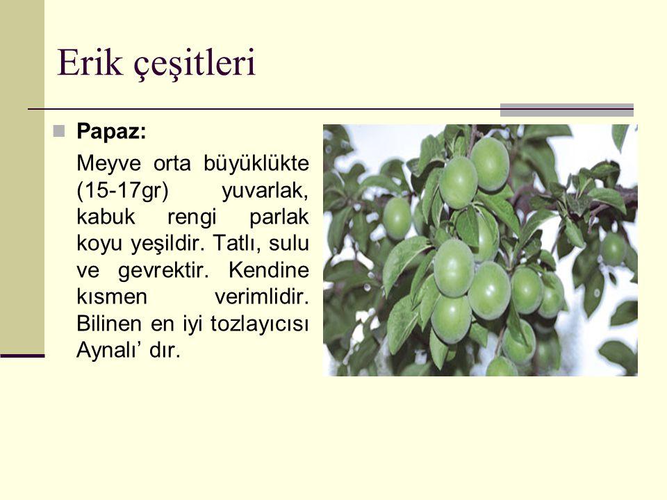 Erik çeşitleri Papaz: Meyve orta büyüklükte (15-17gr) yuvarlak, kabuk rengi parlak koyu yeşildir.