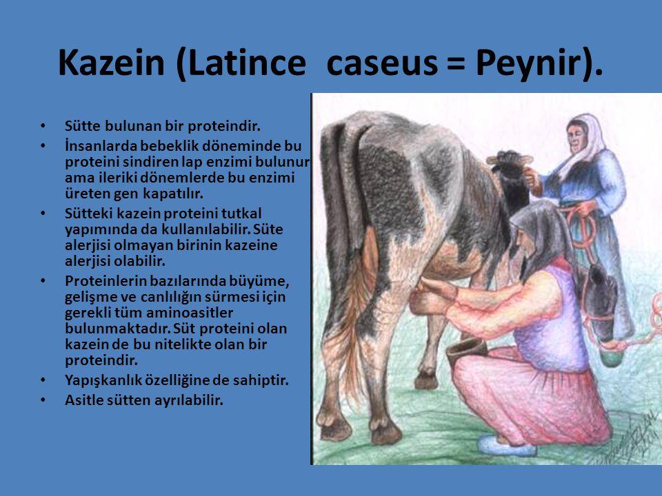 Kazein (Latince caseus = Peynir). Sütte bulunan bir proteindir. İnsanlarda bebeklik döneminde bu proteini sindiren lap enzimi bulunur ama ileriki döne