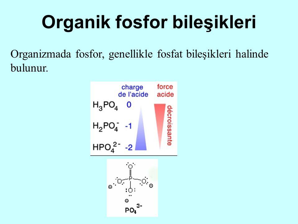 Organik fosfor bileşikleri Organizmada fosfor, genellikle fosfat bileşikleri halinde bulunur.