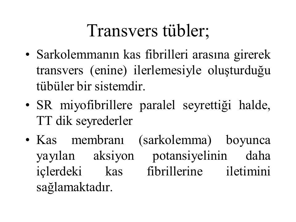 Transvers tübler; Sarkolemmanın kas fibrilleri arasına girerek transvers (enine) ilerlemesiyle oluşturduğu tübüler bir sistemdir. SR miyofibrillere pa