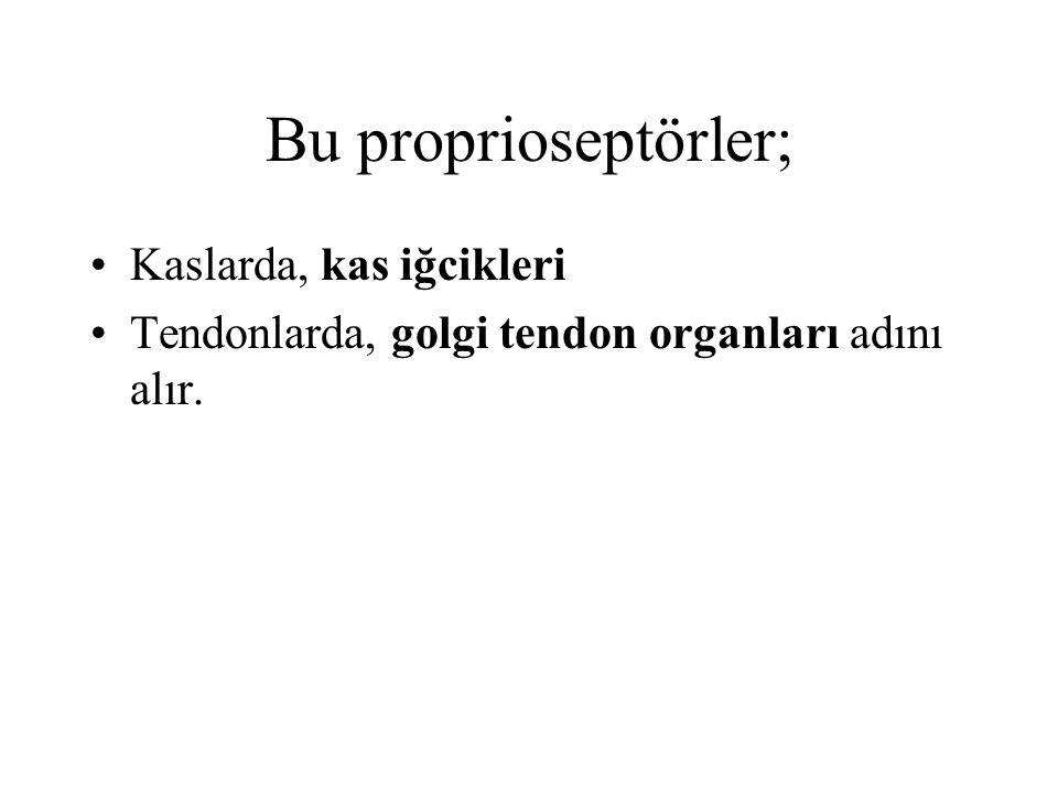 Bu proprioseptörler; Kaslarda, kas iğcikleri Tendonlarda, golgi tendon organları adını alır.