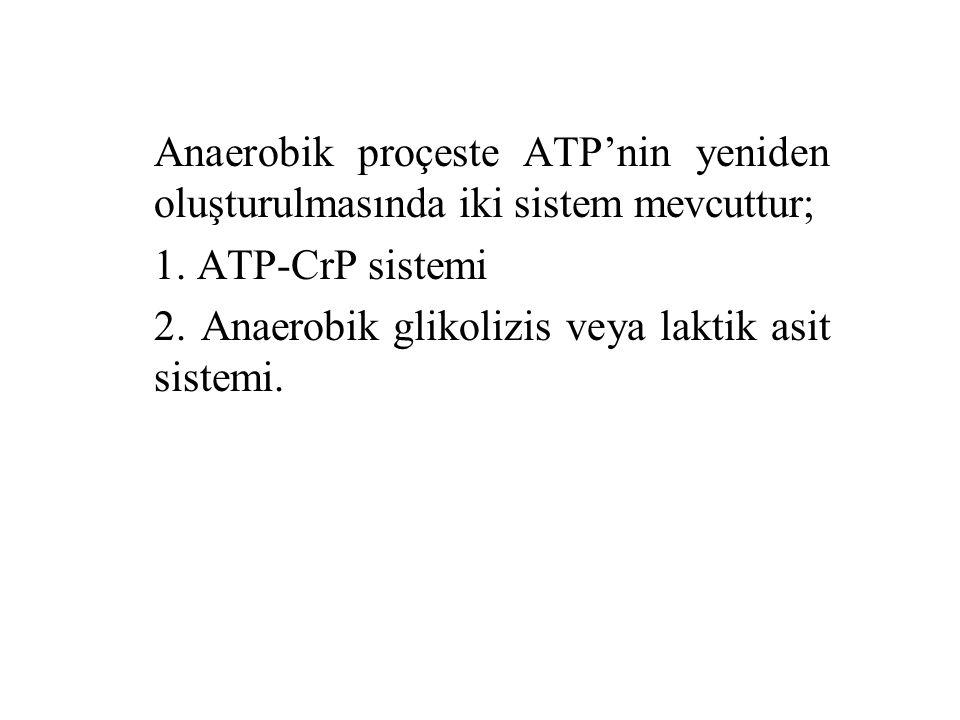 Anaerobik proçeste ATP'nin yeniden oluşturulmasında iki sistem mevcuttur; 1. ATP-CrP sistemi 2. Anaerobik glikolizis veya laktik asit sistemi.
