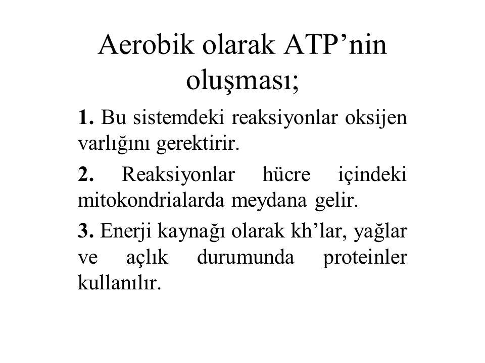 Aerobik olarak ATP'nin oluşması; 1. Bu sistemdeki reaksiyonlar oksijen varlığını gerektirir. 2. Reaksiyonlar hücre içindeki mitokondrialarda meydana g
