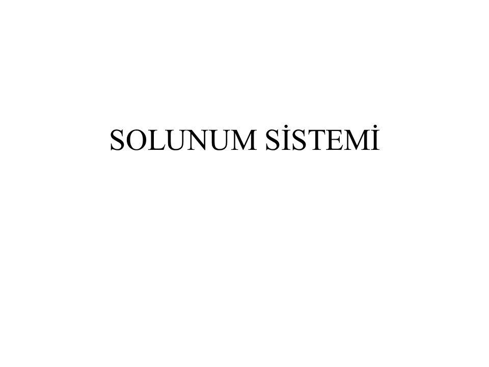 SOLUNUM SİSTEMİ