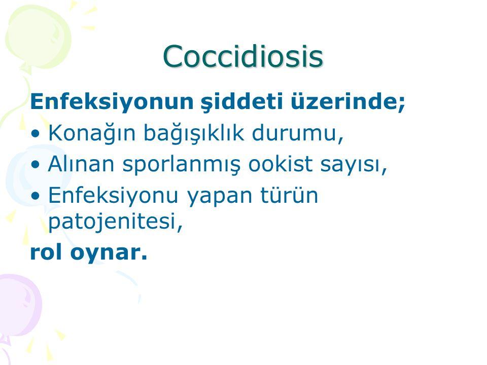 Coccidiosis Türün patojenitesini belirleyen faktörler: Merogoni sayısı ile merogoni dönemleri sonunda oluşan merozoitlerin sayısı.