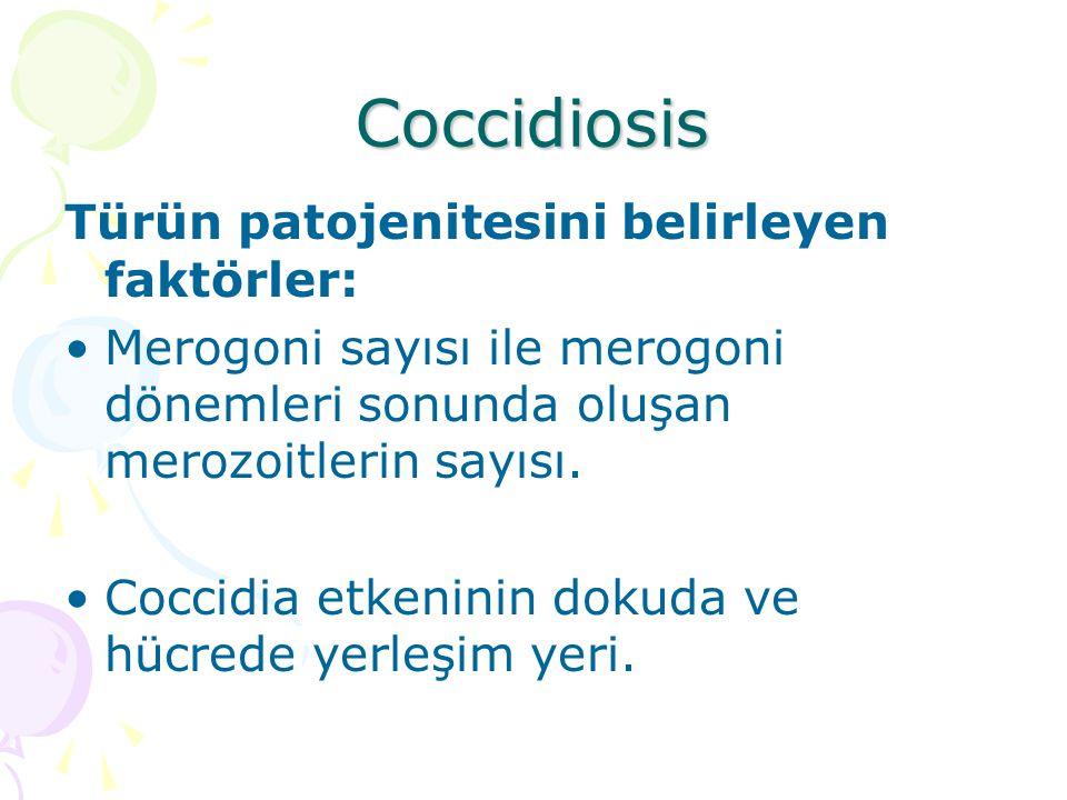 Coccidiosis-Epizootiyoloji Gençlerde sorun olur.Yaşlılar az sayıda oocyst çıkarır, portördür.