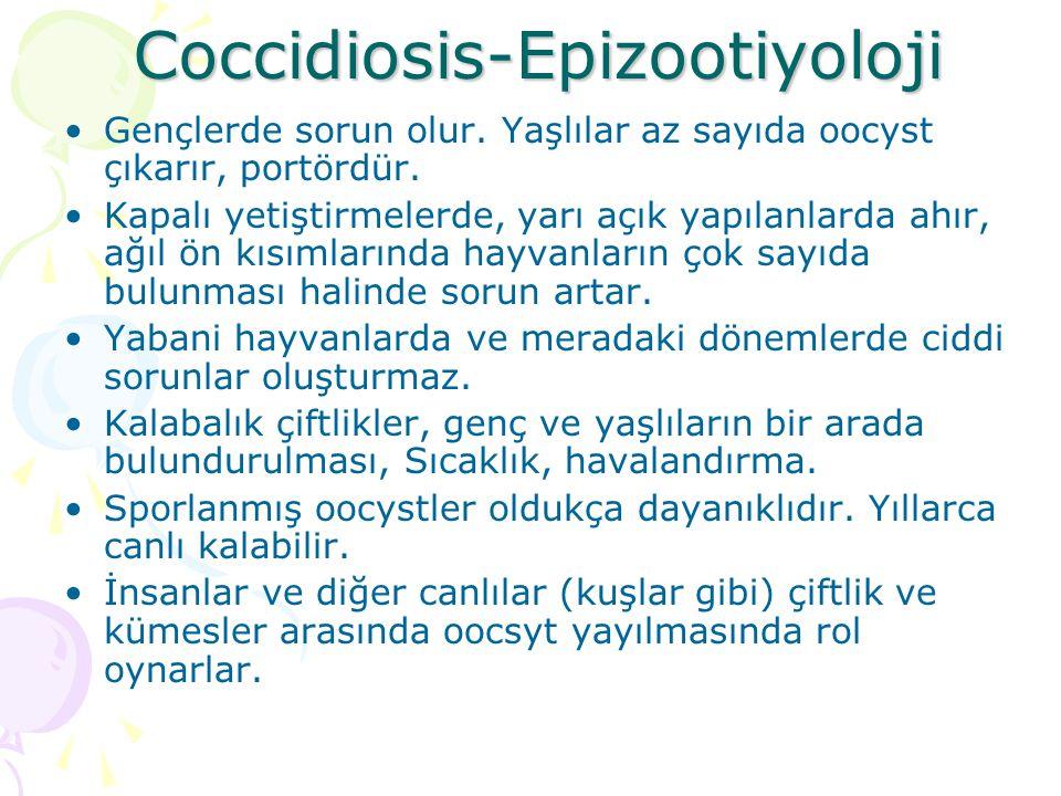 Koksidiyozis-Tanı Klinik belirtiler dikkate alınır.