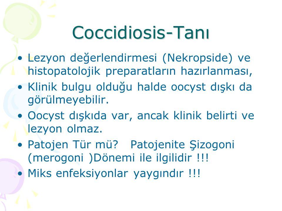Coccidiosis-Sağaltım Kanatlı ve diğer hayvanlar (buzağı, karnivor gibi) da farklıdır.