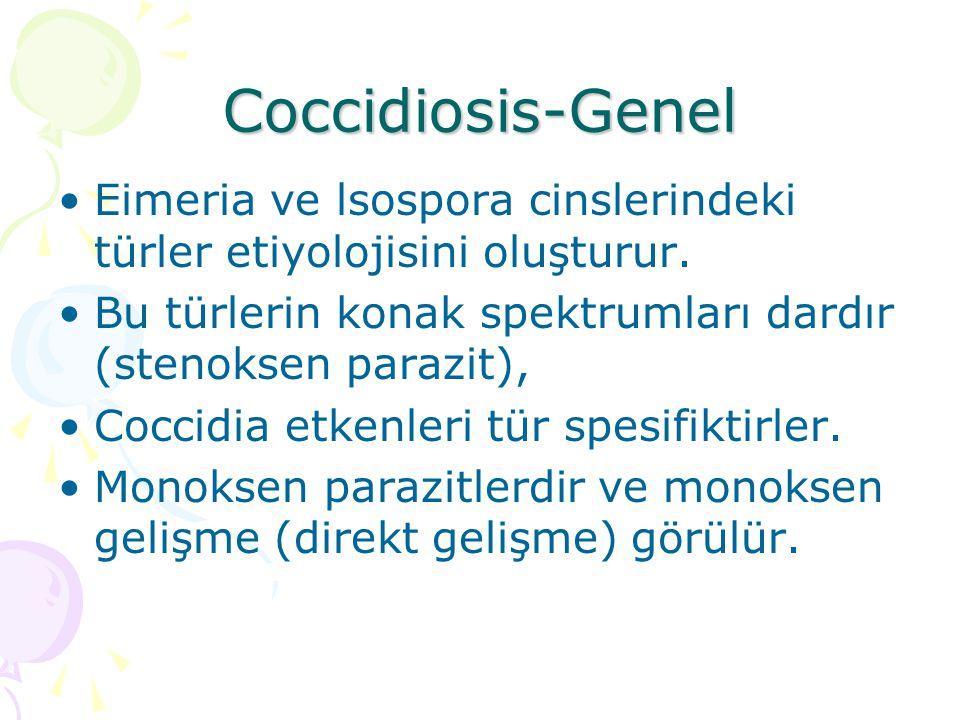 Coccidiosis- Bulaşma Enfeksiyon sporlanmış ookistlerin ağız yoluyla alınmasıyla oluşur.