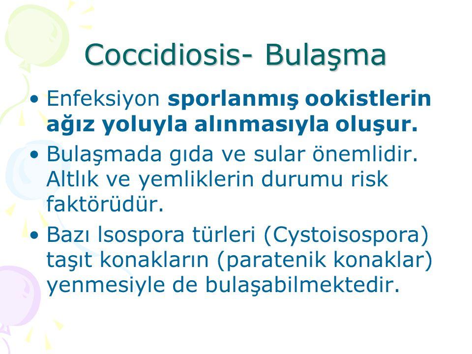 Coccidiosis- Bağışıklık Genellikle türe özgü immun yanıt gelişir.