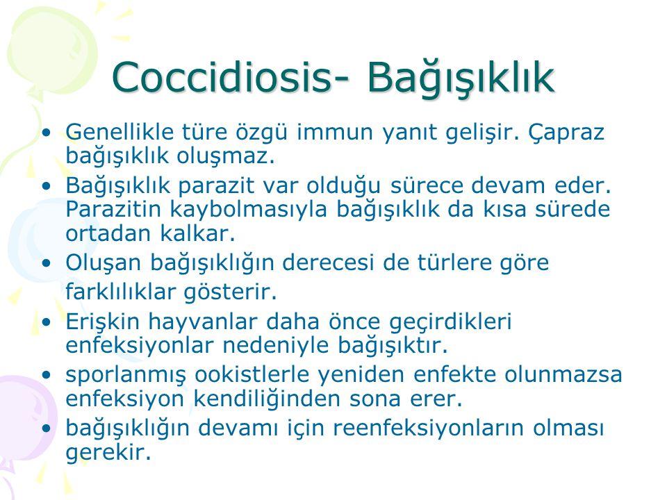Coccidiosis-bağışıklık Oluşan immun yanıt parazitlerin çoğalma ve gelişme gücünü azaltır.