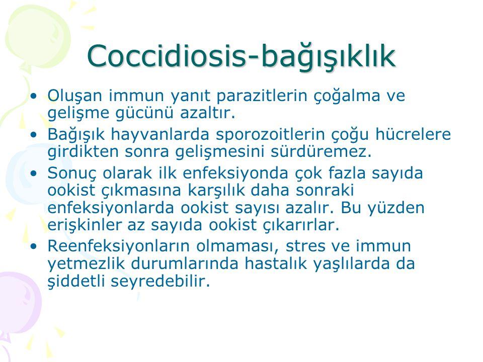 Coccidiosis-Bağışıklık Hücresel ve humoral bağışıklık görülür.