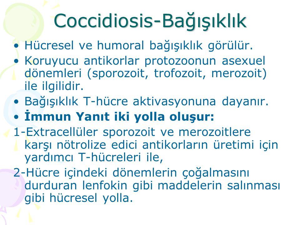 Coccidiosis-Patogenezis Sindirim kanalında türlere göre göre lezyonlar oluşur.