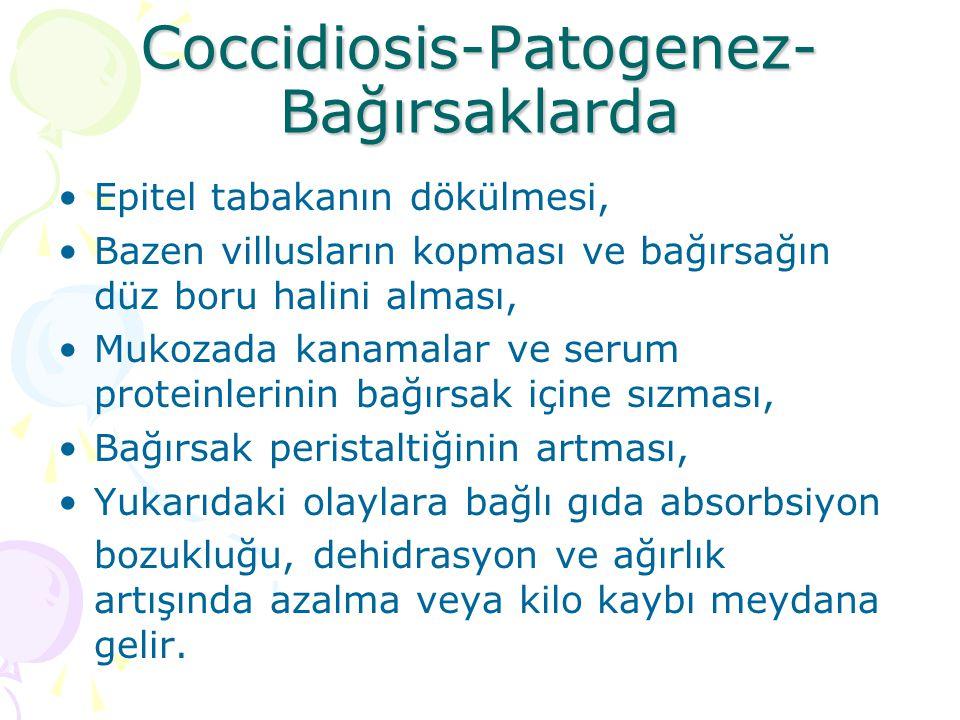 Coccidiosis-Patolojik lezyonlar Epitel tabakanın dökülmesi, bazen villusların kopması, bağırsak mukozasının kalınlaşması, bağırsak duvarında hiperemi, bağırsak mukozasında kanamalar, bağırsak içeriğinin sulu, mukuslu ve ve bazen kanlı olmasıdır.