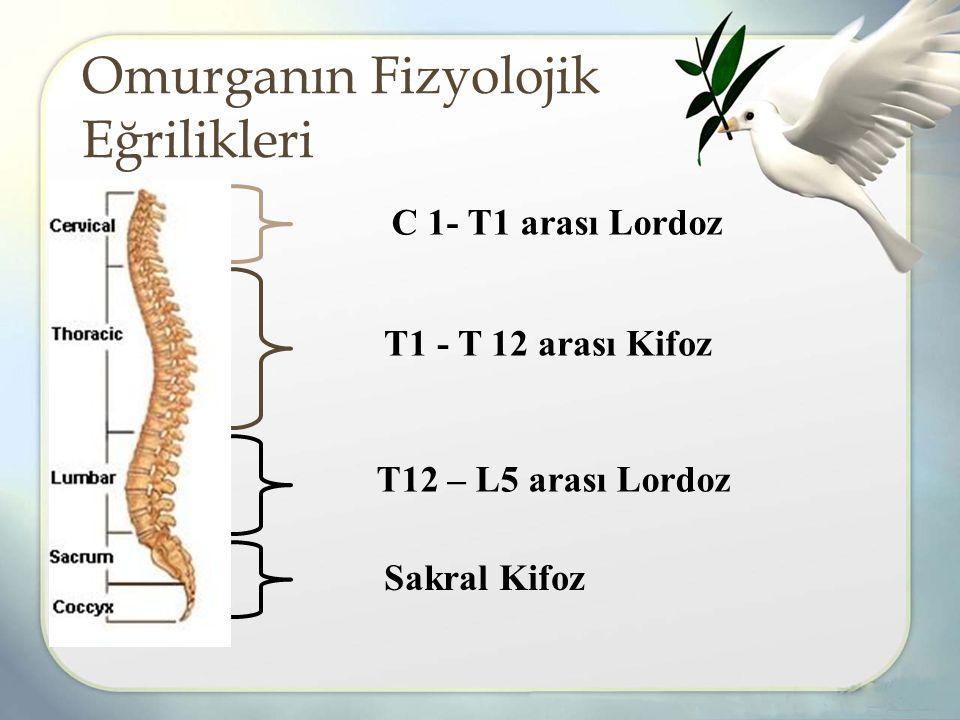 Omurganın Fizyolojik Eğrilikleri C 1- T1 arası Lordoz T12 – L5 arası Lordoz T1 - T 12 arası Kifoz Sakral Kifoz