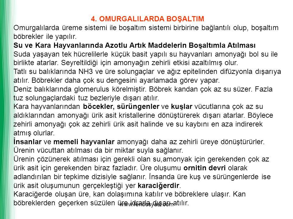 www.fendosyasi.com 4. OMURGALILARDA BOŞALTIM Omurgalılarda üreme sistemi ile boşaltım sistemi birbirine bağlantılı olup, boşaltım böbrekler ile yapılı