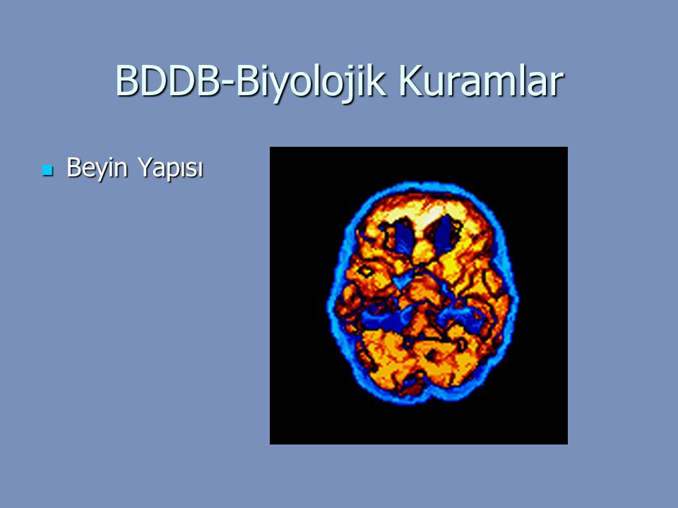 BDDB-Biyolojik Kuramlar Beyin Yapısı Beyin Yapısı