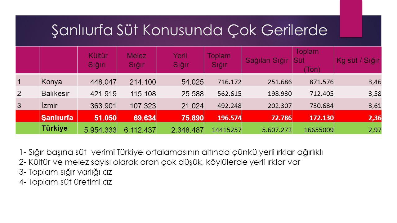 Şanlıurfa Süt Konusunda Çok Gerilerde Kültür Sığırı Melez Sığır Yerli Sığır Toplam Sığır Sağılan Sığır Toplam Süt (Ton) Kg süt / Sığır 1Konya 448.0472