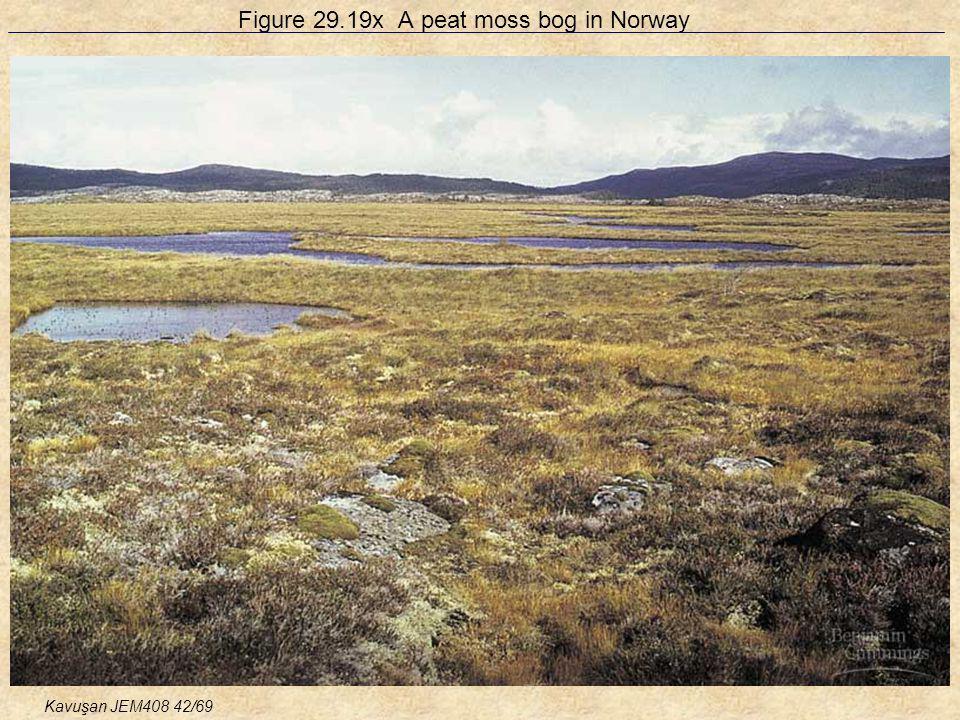 Figure 29.19x A peat moss bog in Norway Kavuşan JEM408 42/69