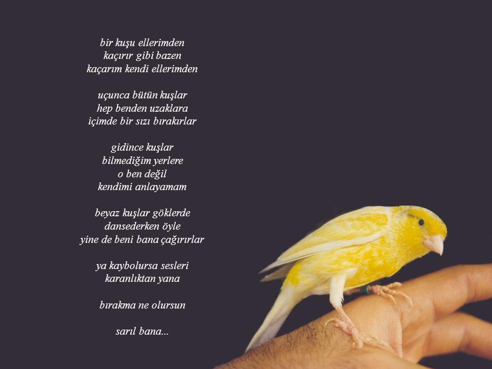 bir kuşu ellerimden kaçırır gibi bazen kaçarım kendi ellerimden uçunca bütün kuşlar hep benden uzaklara içimde bir sızı bırakırlar gidince kuşlar bilmediğim yerlere o ben değil kendimi anlayamam beyaz kuşlar göklerde dansederken öyle yine de beni bana çağırırlar ya kaybolursa sesleri karanlıktan yana bırakma ne olursun sarıl bana...