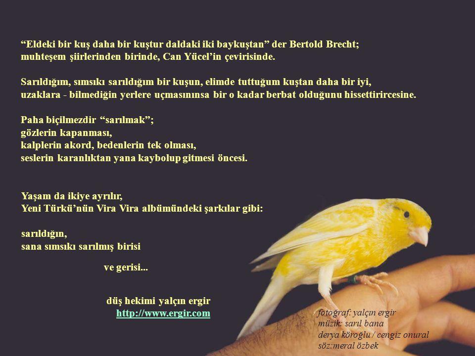 Eldeki bir kuş daha bir kuştur daldaki iki baykuştan der Bertold Brecht; muhteşem şiirlerinden birinde, Can Yücel'in çevirisinde.