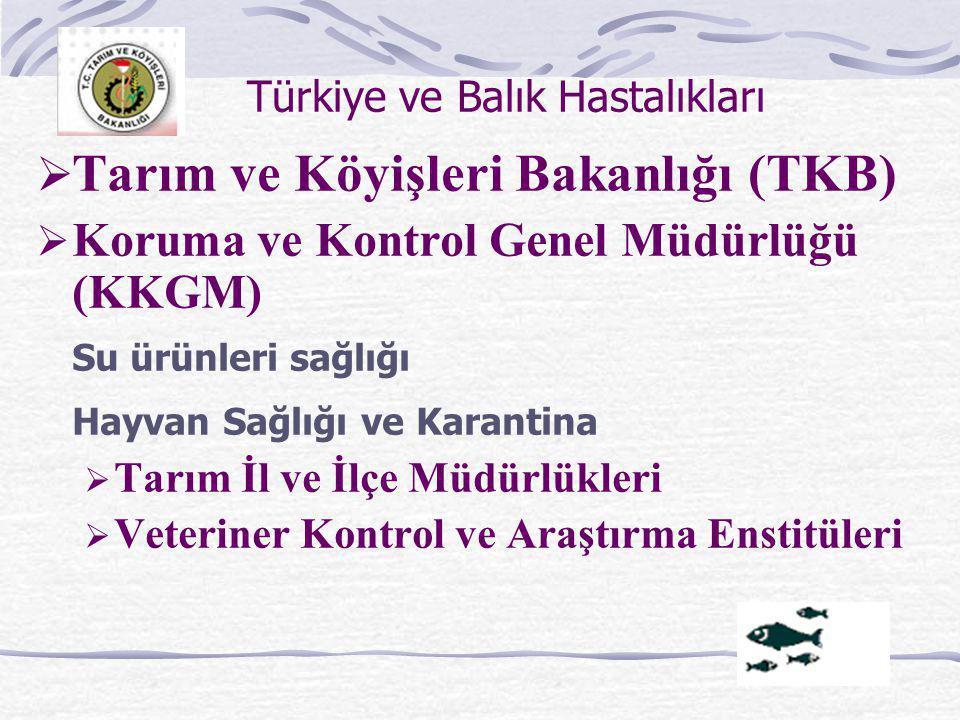 Türkiye ve Balık Hastalıkları  Tarım ve Köyişleri Bakanlığı (TKB)  Koruma ve Kontrol Genel Müdürlüğü (KKGM) Su ürünleri sağlığı Hayvan Sağlığı ve Ka
