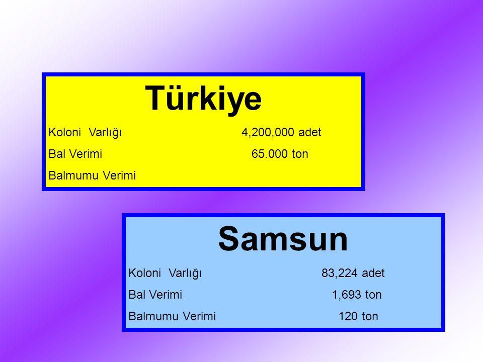 Türkiye Koloni Varlığı4,200,000 adet Bal Verimi 65.000 ton Balmumu Verimi Samsun Koloni Varlığı83,224 adet Bal Verimi 1,693 ton Balmumu Verimi 120 ton