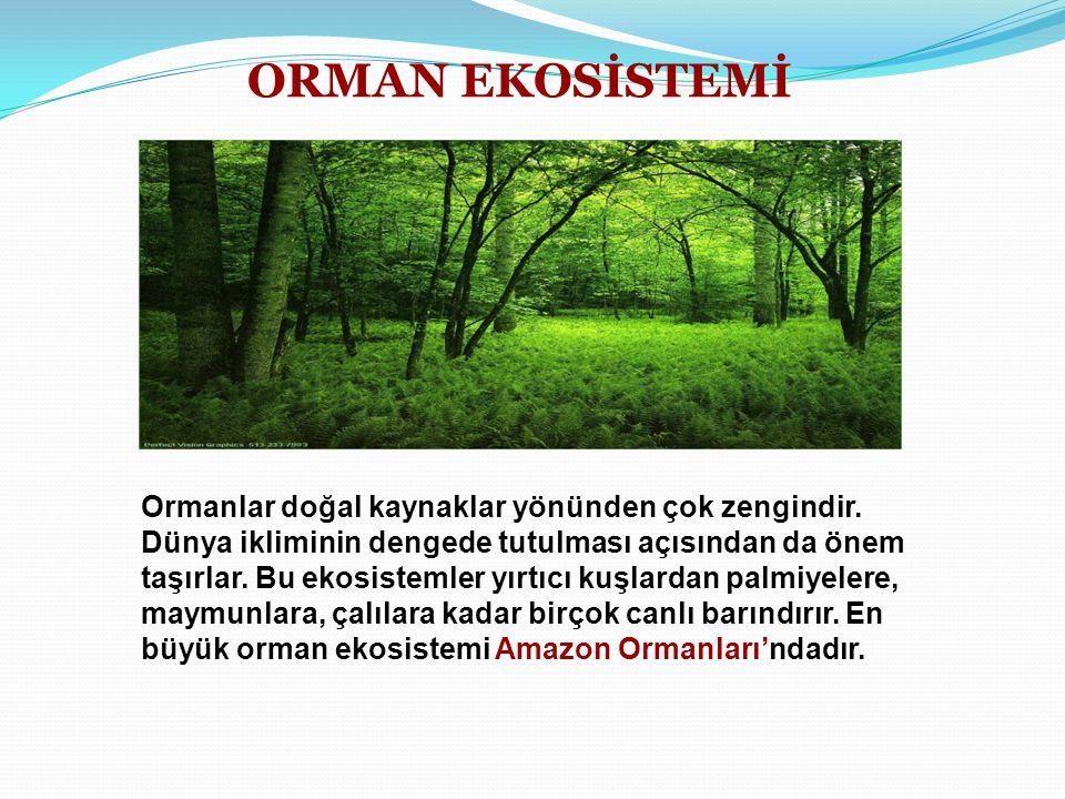 ORMAN EKOSİSTEMİ Ormanlar doğal kaynaklar yönünden çok zengindir. Dünya ikliminin dengede tutulması açısından da önem taşırlar. Bu ekosistemler yırtıc