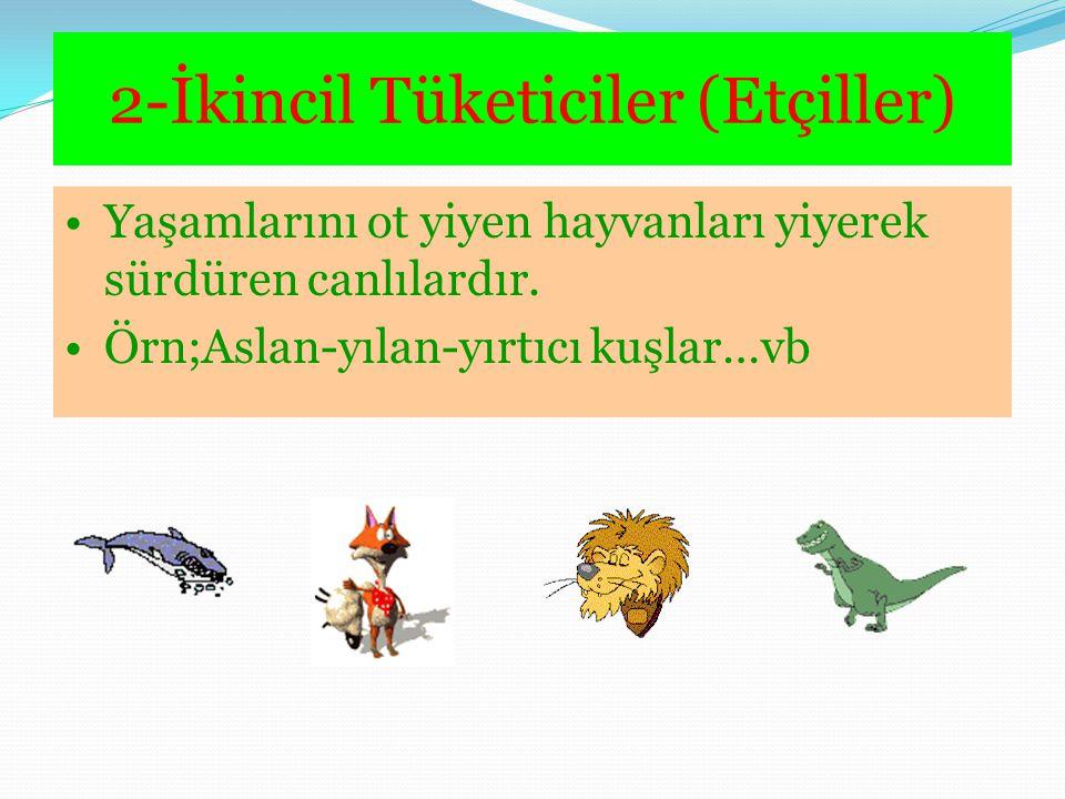 2-İkincil Tüketiciler (Etçiller) Yaşamlarını ot yiyen hayvanları yiyerek sürdüren canlılardır. Örn;Aslan-yılan-yırtıcı kuşlar…vb