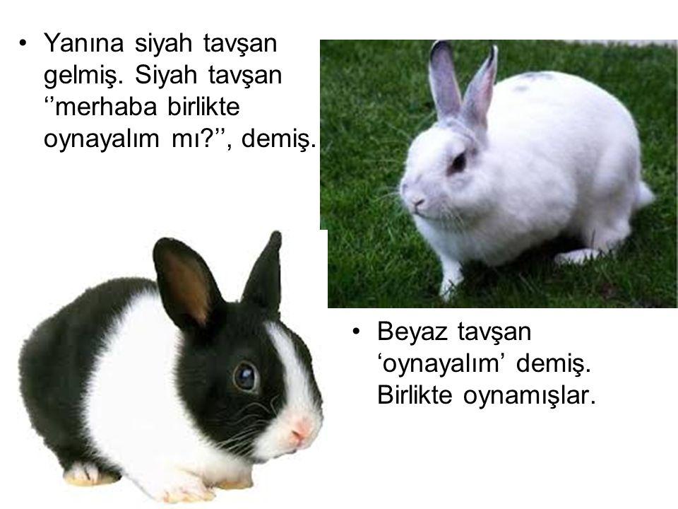 Yanına siyah tavşan gelmiş. Siyah tavşan ''merhaba birlikte oynayalım mı?'', demiş. Beyaz tavşan 'oynayalım' demiş. Birlikte oynamışlar.