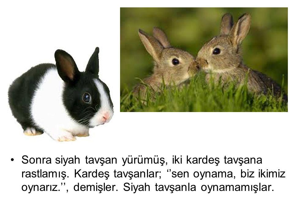 Sonra siyah tavşan yürümüş, iki kardeş tavşana rastlamış. Kardeş tavşanlar; ''sen oynama, biz ikimiz oynarız.'', demişler. Siyah tavşanla oynamamışlar
