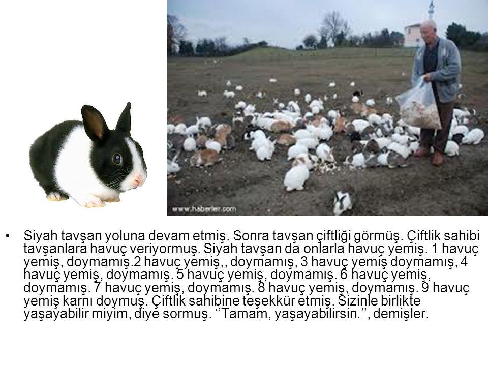 Siyah tavşan yoluna devam etmiş. Sonra tavşan çiftliği görmüş. Çiftlik sahibi tavşanlara havuç veriyormuş. Siyah tavşan da onlarla havuç yemiş. 1 havu